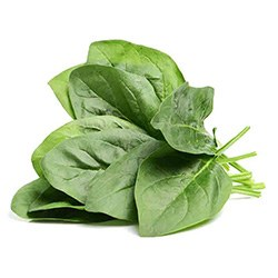 Spinach | Superfoods You Need to Eat | Australian Native Botanicals